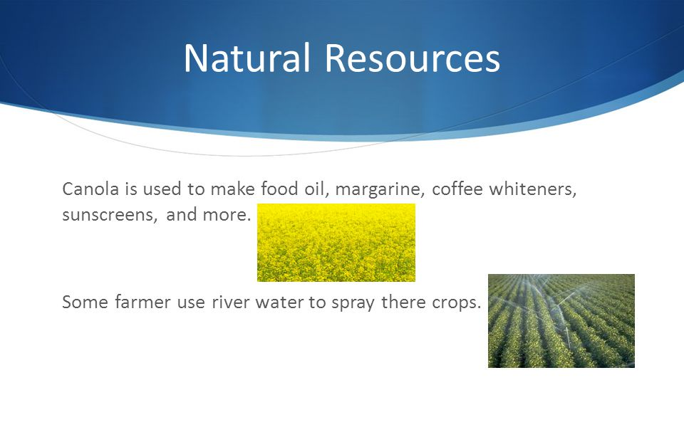 Natural Resources Canola is used to make food oil, margarine, coffee whiteners, sunscreens, and more.