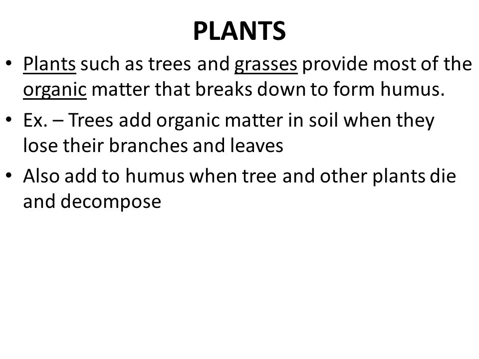 PLANTS Plants such as trees and grasses provide most of the organic matter that breaks down to form humus.