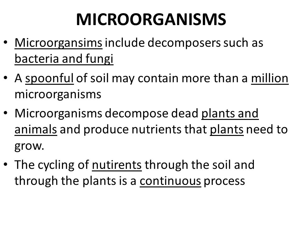MICROORGANISMS Microorgansims include decomposers such as bacteria and fungi. A spoonful of soil may contain more than a million microorganisms.