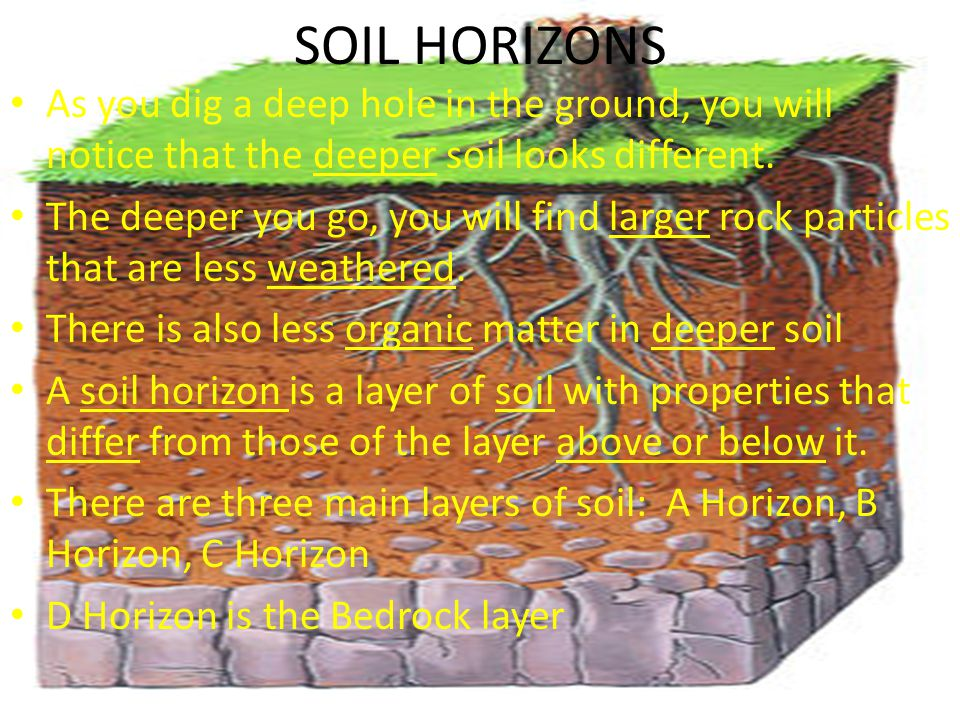 SOIL HORIZONS As you dig a deep hole in the ground, you will notice that the deeper soil looks different.