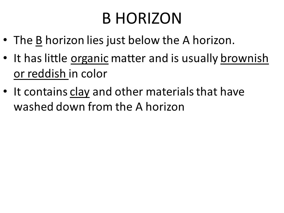 B HORIZON The B horizon lies just below the A horizon.