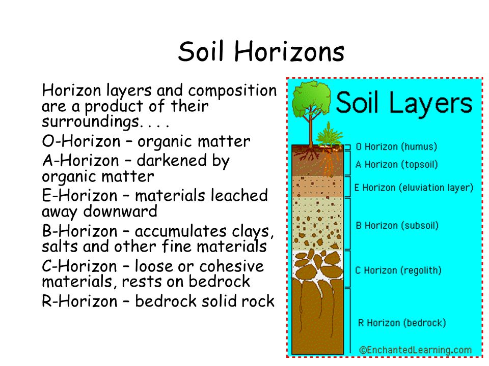 Soil Horizons Horizon layers and composition are a product of their surroundings. . . . O-Horizon – organic matter.
