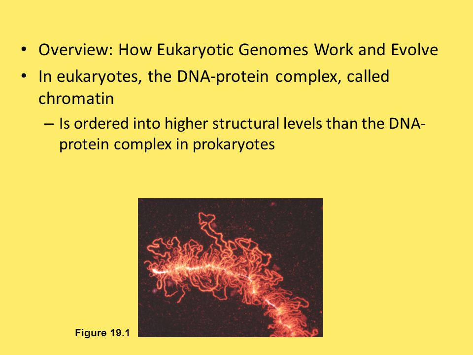 Overview: How Eukaryotic Genomes Work and Evolve