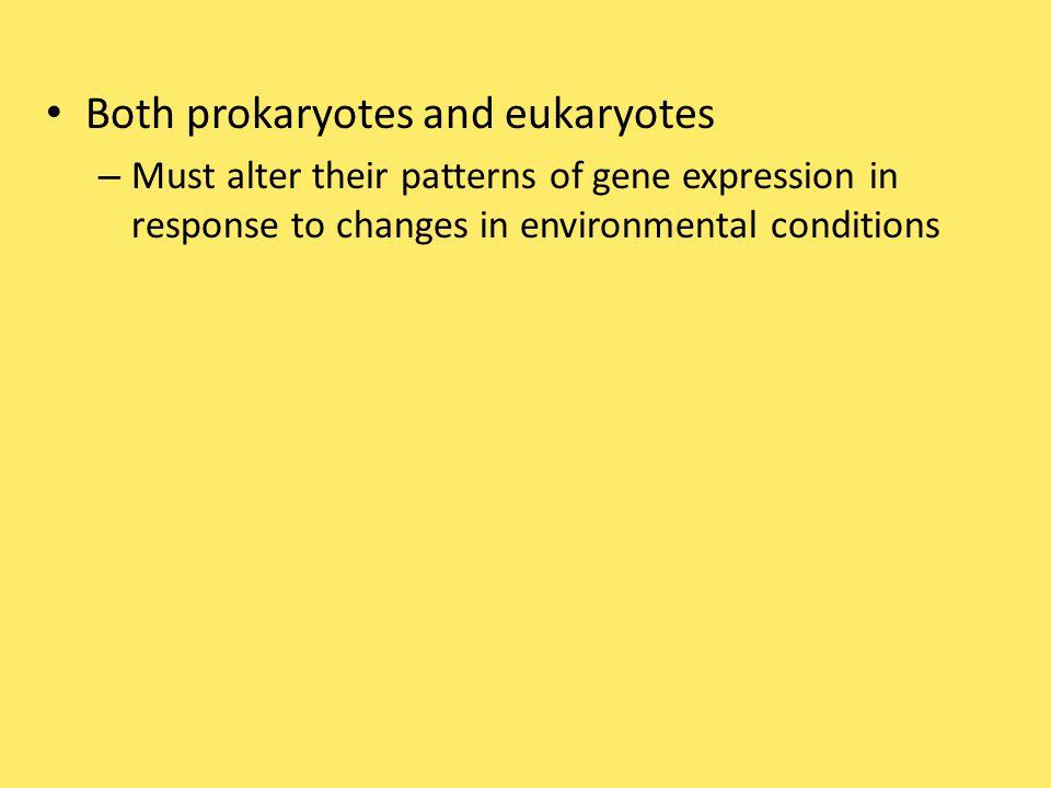 Both prokaryotes and eukaryotes