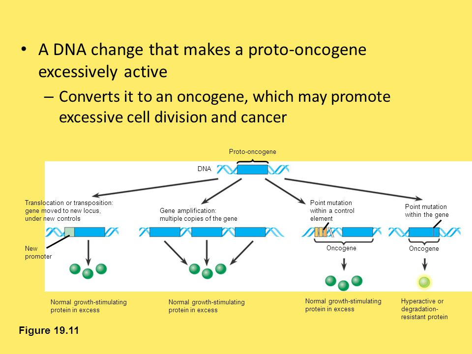 A DNA change that makes a proto-oncogene excessively active