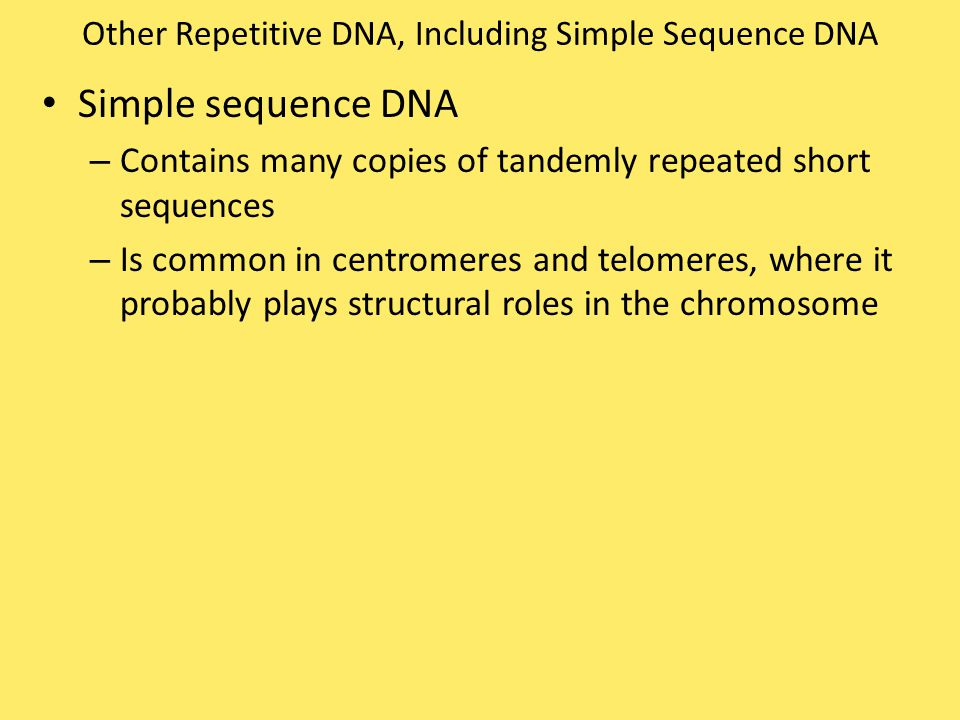 Other Repetitive DNA, Including Simple Sequence DNA