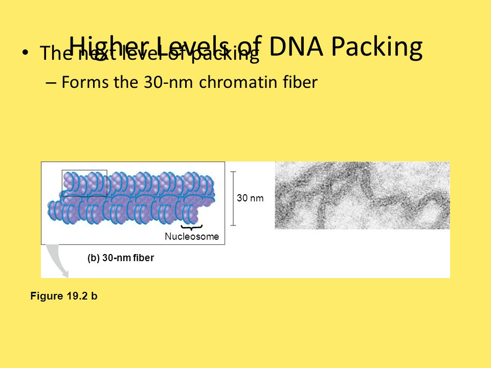Higher Levels of DNA Packing