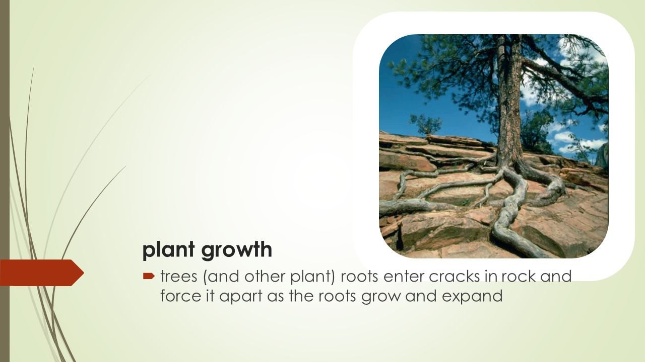 plant growth trees (and other plant) roots enter cracks in rock and force it apart as the roots grow and expand.