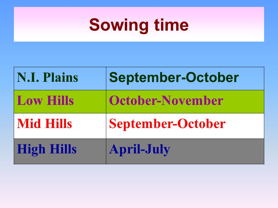 Sowing time N.I. Plains September-October Low Hills October-November