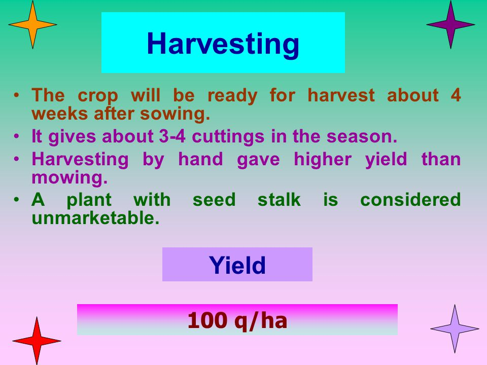 Harvesting The crop will be ready for harvest about 4 weeks after sowing. It gives about 3-4 cuttings in the season.