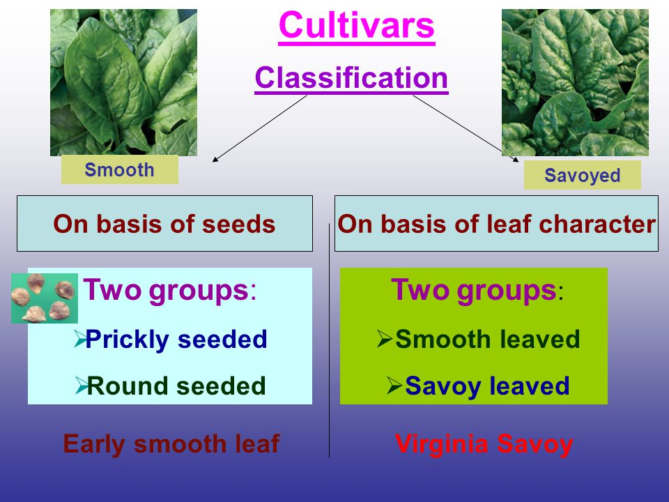 On basis of leaf character