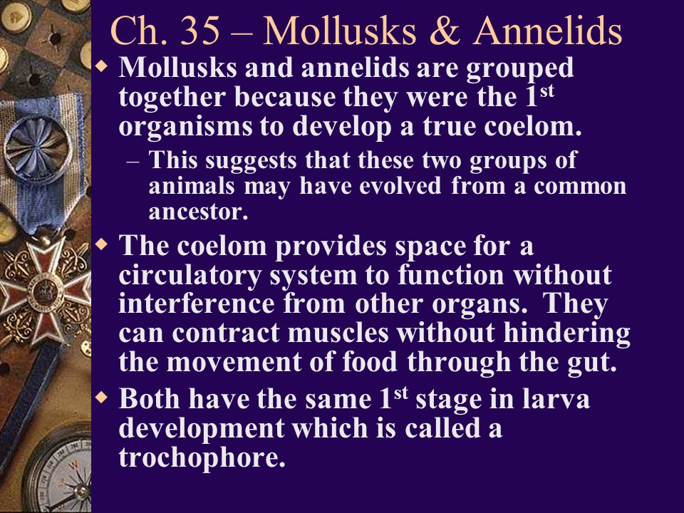 Ch. 35 – Mollusks & Annelids