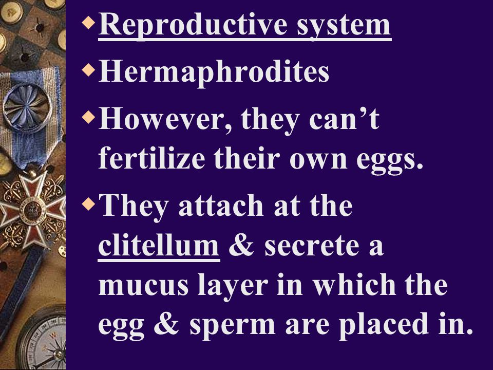 Reproductive system Hermaphrodites. However, they can't fertilize their own eggs.