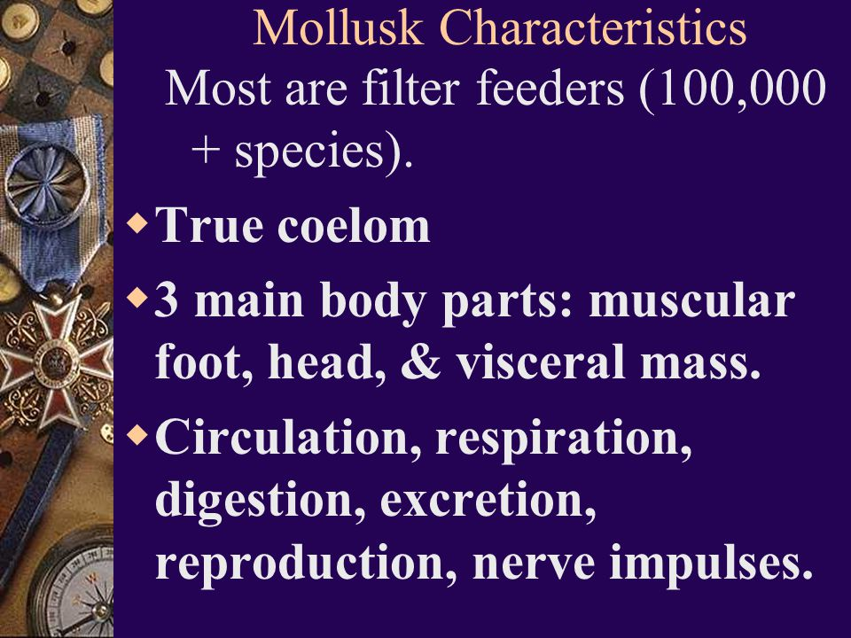 mollusk hispanic singles Mollusca or mollusk, molluscs, phylum mollusca mollusca is a latin word aristotle used it for the first time the word is used for soft-bodied animals.