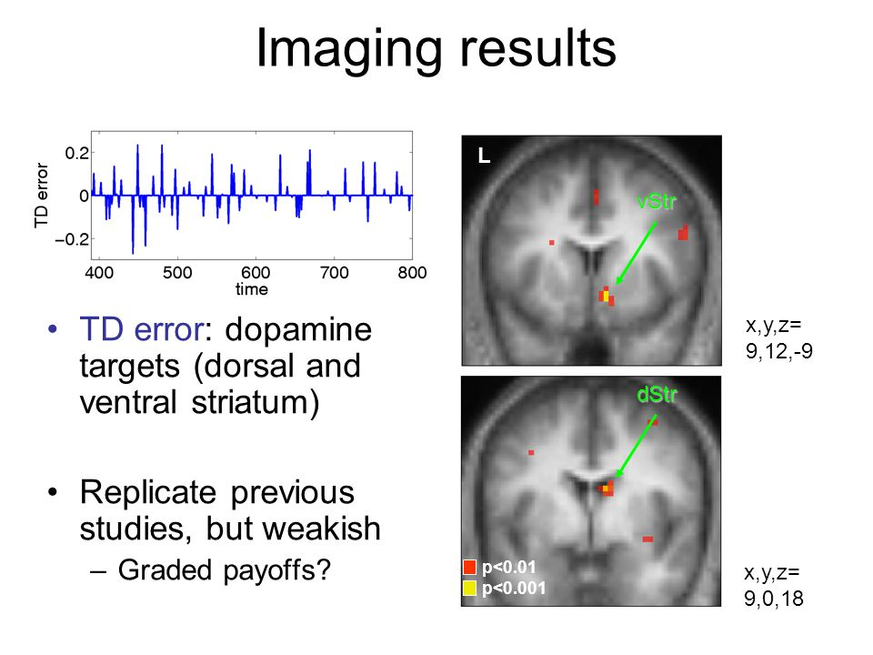 Imaging results L. vStr. TD error: dopamine targets (dorsal and ventral striatum) Replicate previous studies, but weakish.