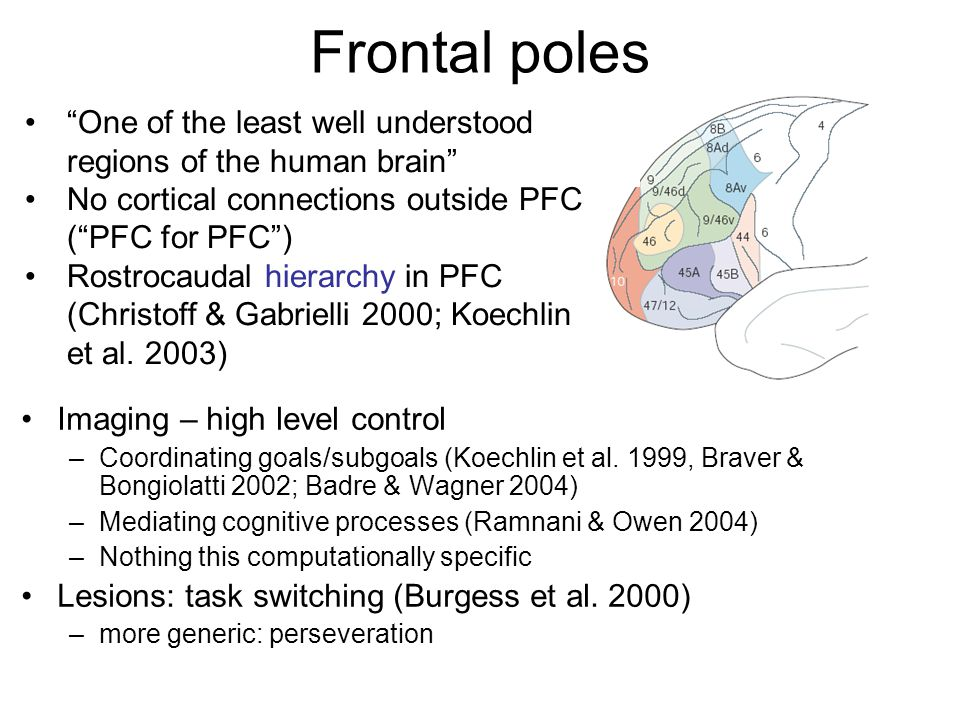 Frontal poles One of the least well understood regions of the human brain No cortical connections outside PFC ( PFC for PFC )