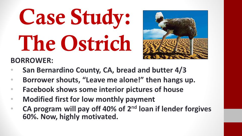 Case Study: The Ostrich