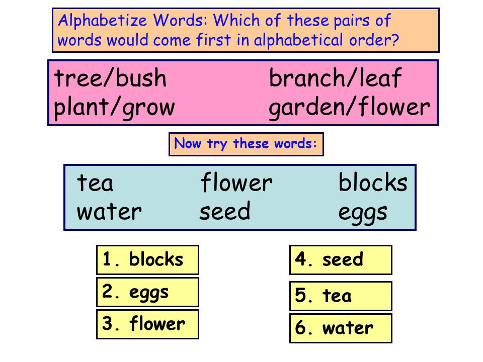 tree/bush branch/leaf plant/grow garden/flower