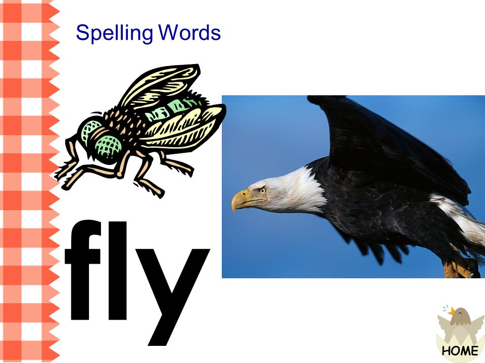 Spelling Words fly