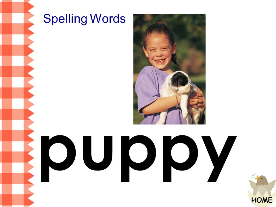 Spelling Words puppy