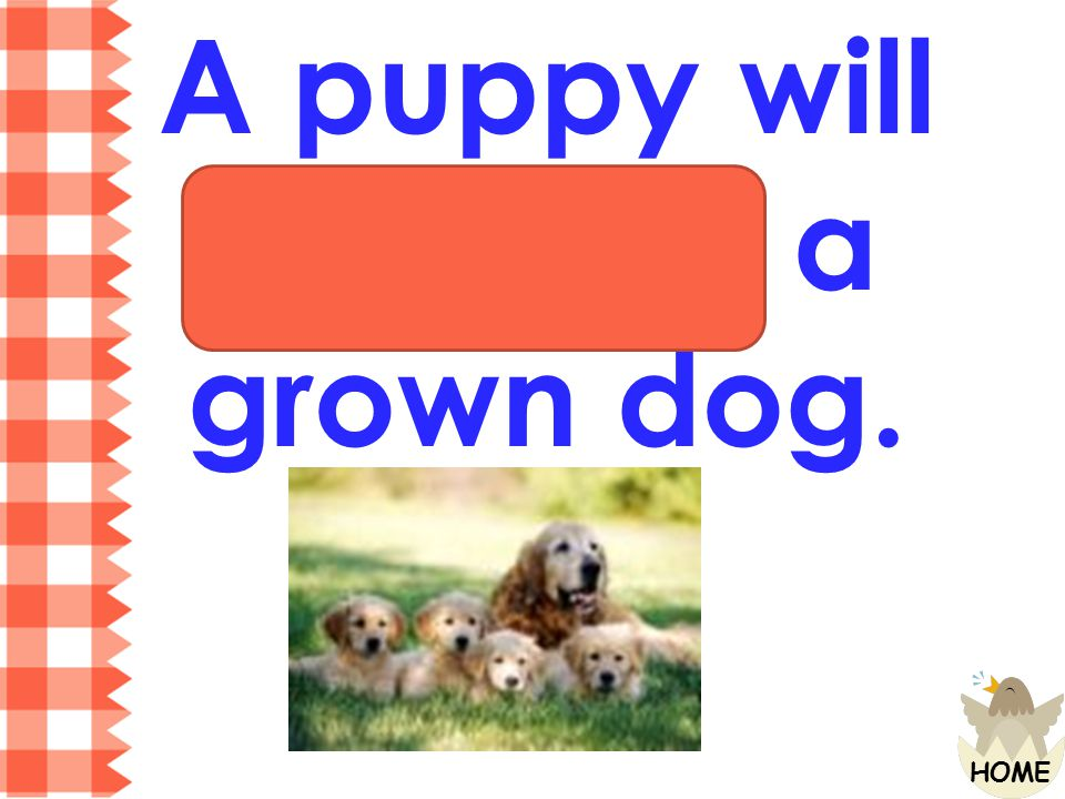 A puppy will become a grown dog.