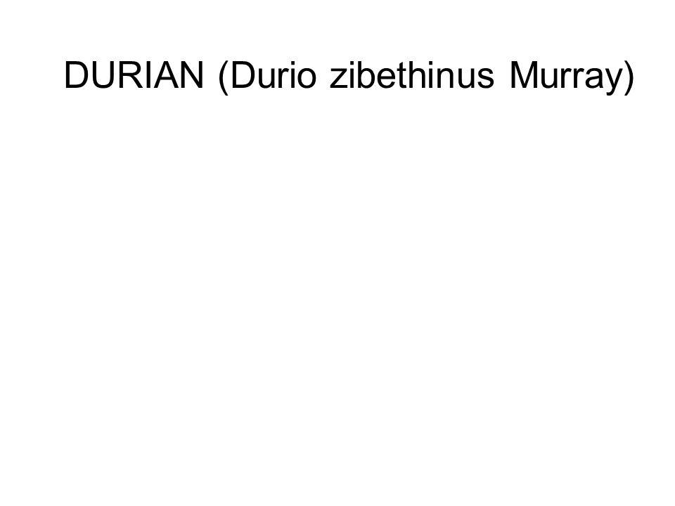 DURIAN (Durio zibethinus Murray)