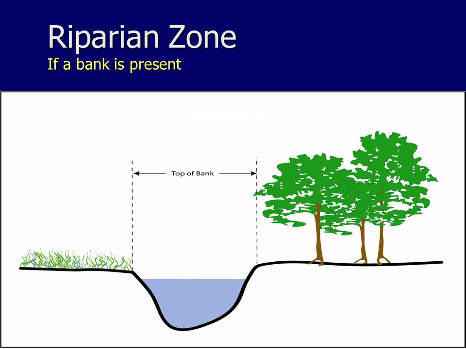 Riparian Zone If a bank is present