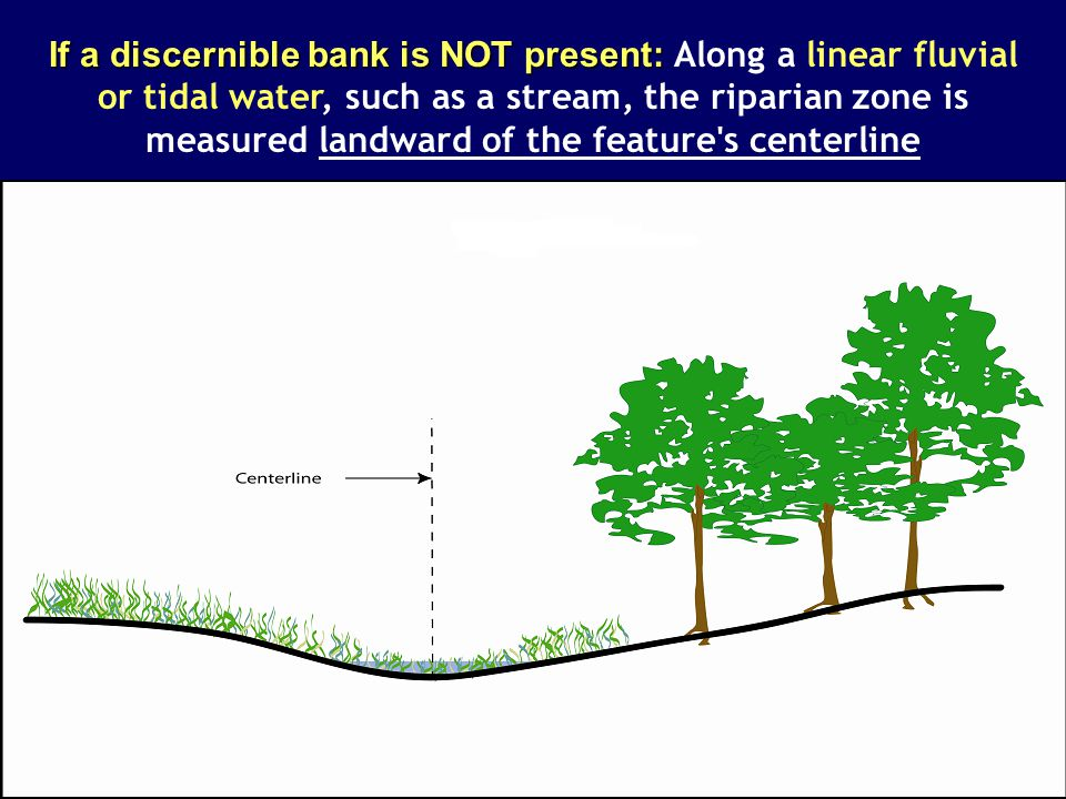 If a discernible bank is NOT present: Along a linear fluvial or tidal water, such as a stream, the riparian zone is measured landward of the feature s centerline