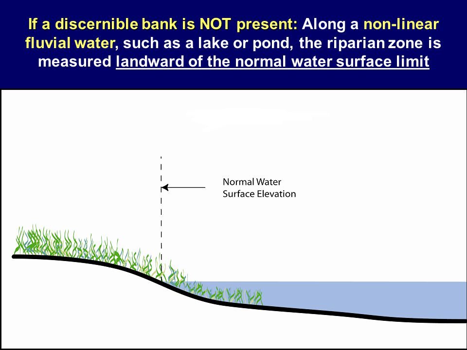 If a discernible bank is NOT present: Along a non-linear fluvial water, such as a lake or pond, the riparian zone is measured landward of the normal water surface limit