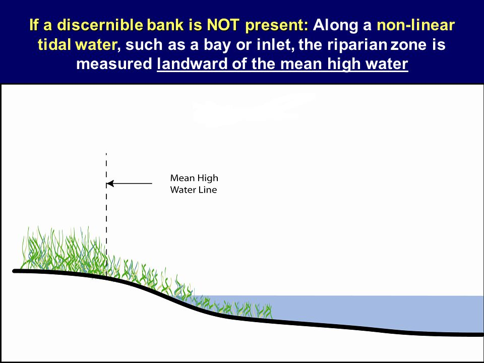 If a discernible bank is NOT present: Along a non-linear tidal water, such as a bay or inlet, the riparian zone is measured landward of the mean high water