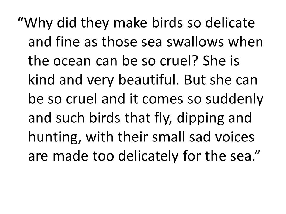 Why did they make birds so delicate and fine as those sea swallows when the ocean can be so cruel.