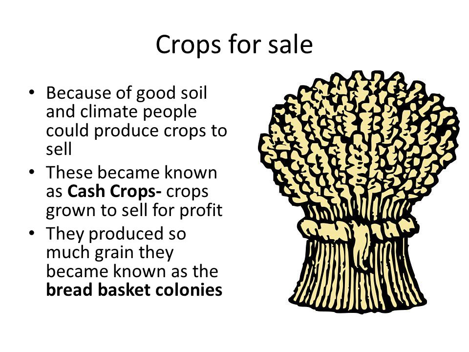 Crops for sale Because of good soil and climate people could produce crops to sell. These became known as Cash Crops- crops grown to sell for profit.