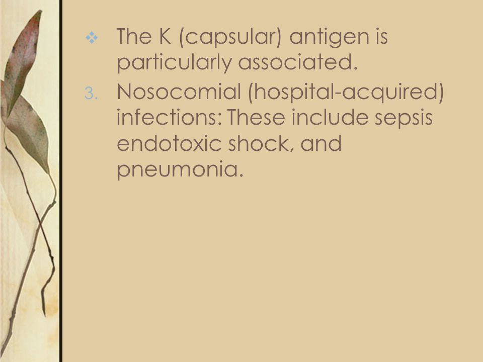The K (capsular) antigen is particularly associated.