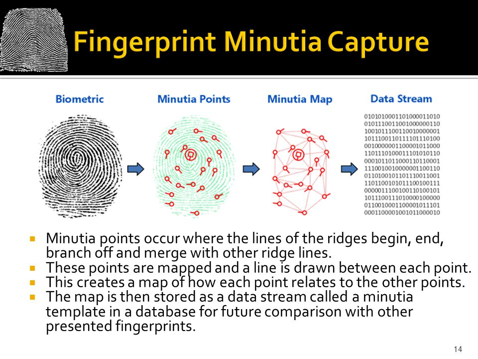 Fingerprint Minutia Capture