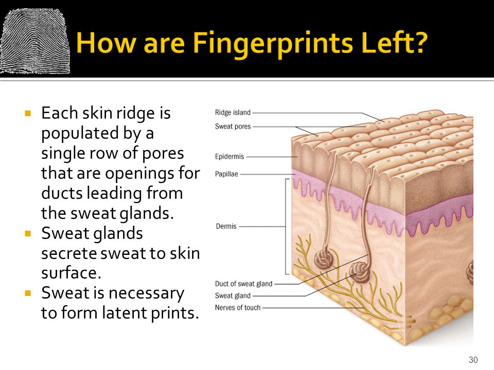 How are Fingerprints Left