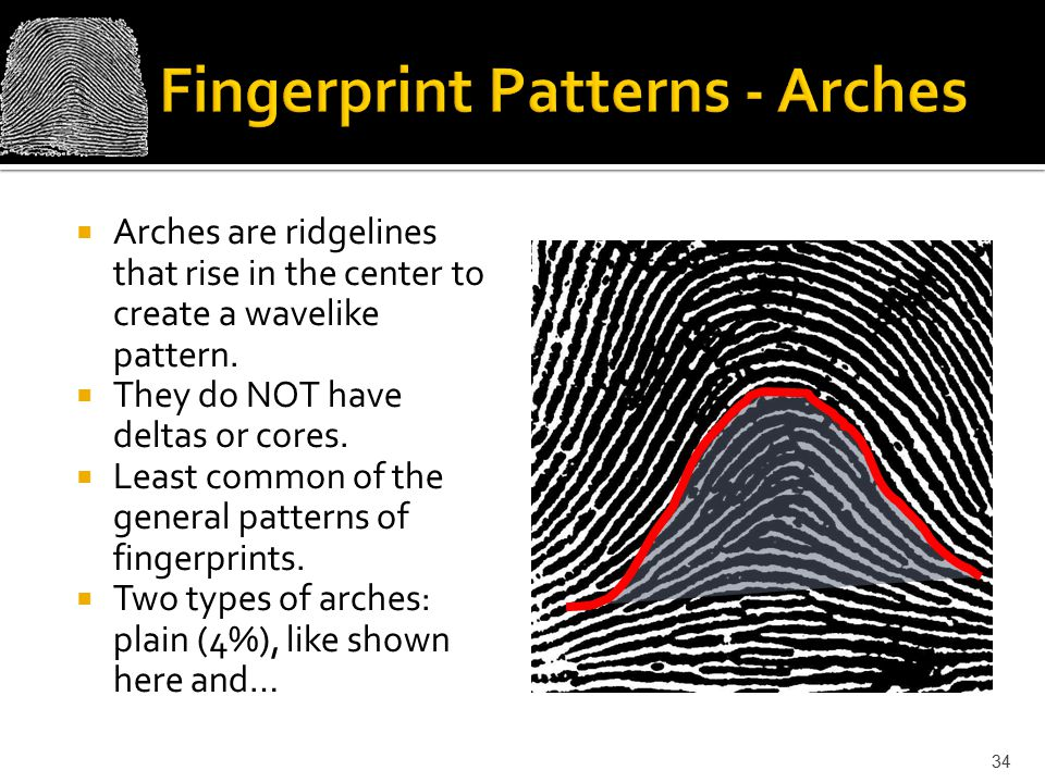 Fingerprint Patterns - Arches