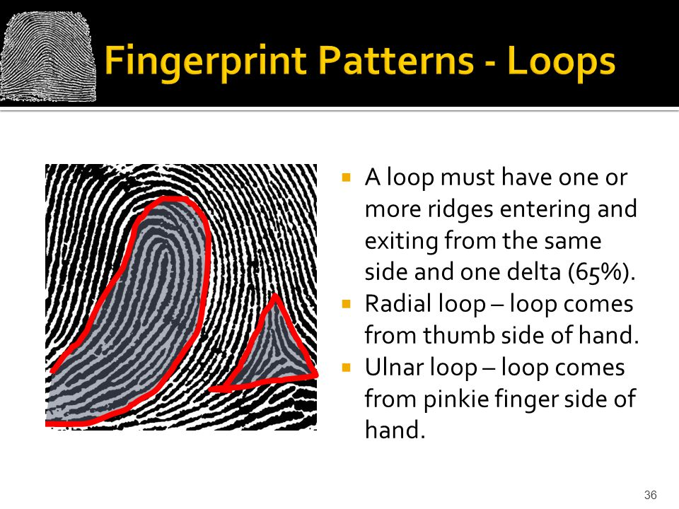 Fingerprint Patterns - Loops