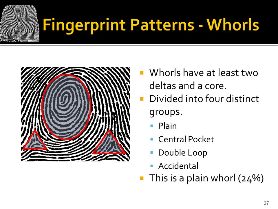Fingerprint Patterns - Whorls
