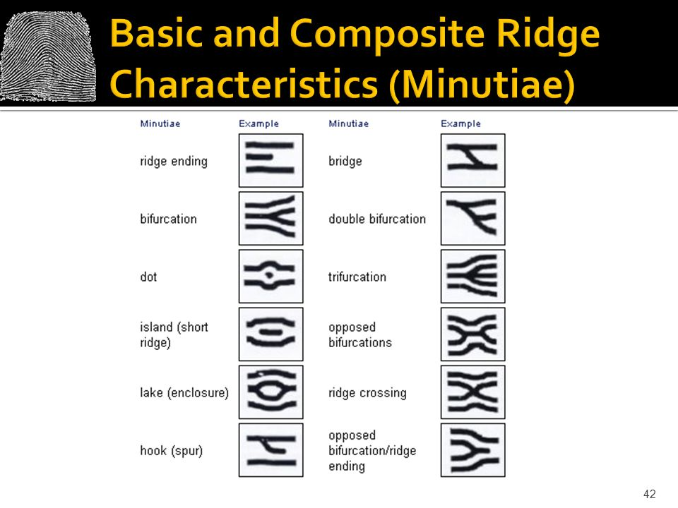 Basic and Composite Ridge Characteristics (Minutiae)