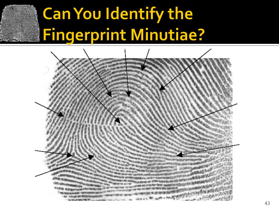 Can You Identify the Fingerprint Minutiae