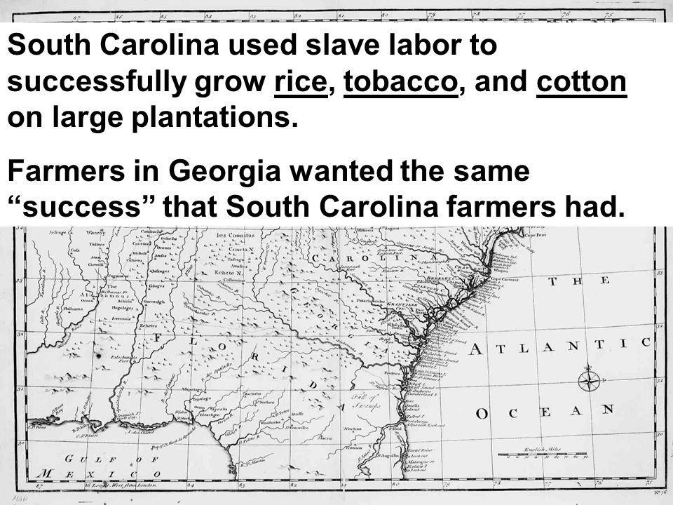 South Carolina used slave labor to successfully grow rice, tobacco, and cotton on large plantations.