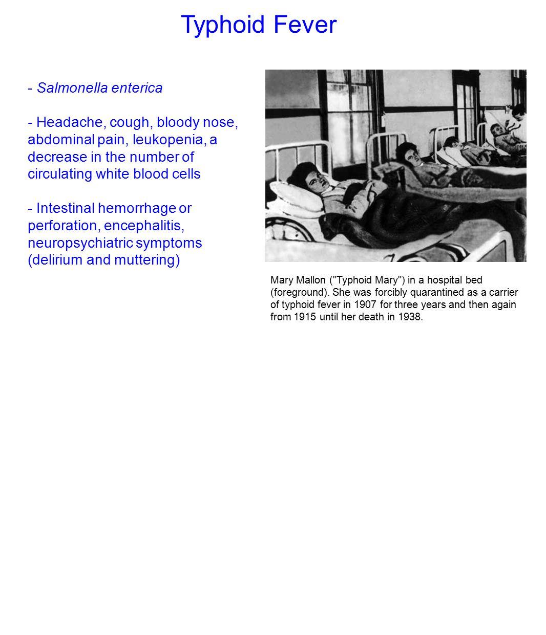 Typhoid Fever - Salmonella enterica