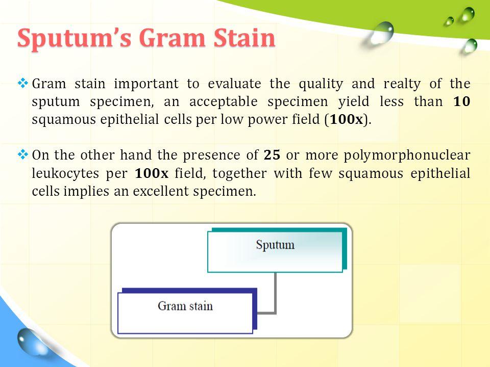 Sputum's Gram Stain