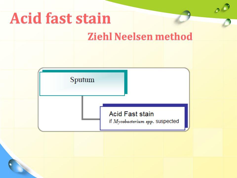 Acid fast stain Ziehl Neelsen method