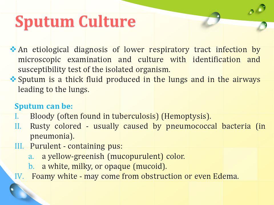 Sputum Culture
