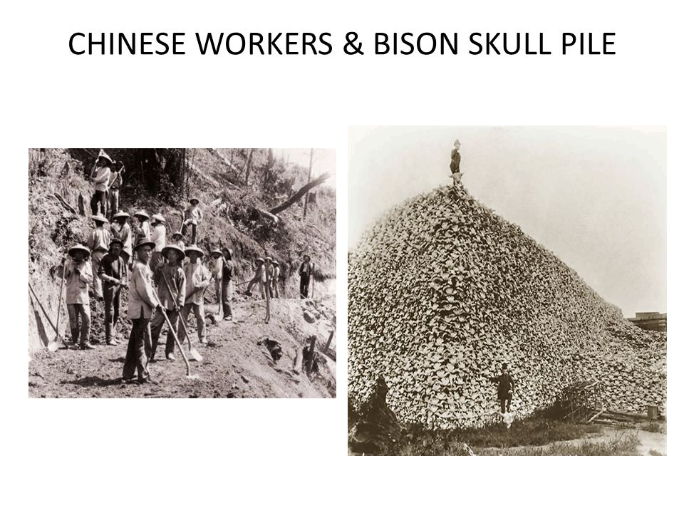 CHINESE WORKERS & BISON SKULL PILE