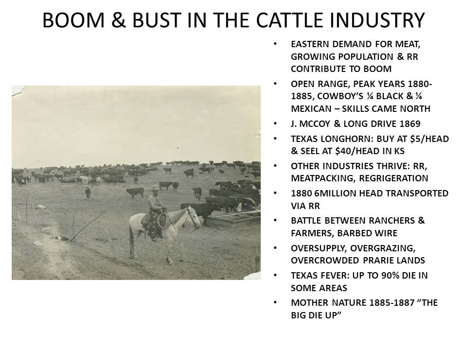 BOOM & BUST IN THE CATTLE INDUSTRY