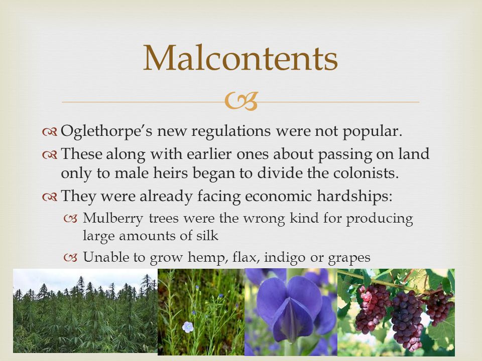 Malcontents Oglethorpe's new regulations were not popular.
