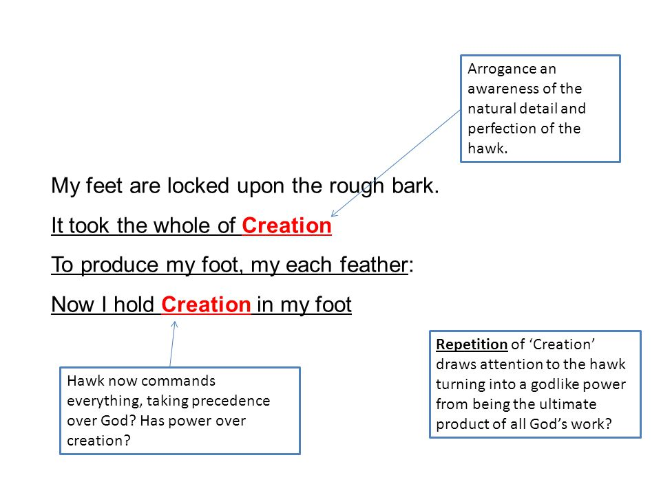My feet are locked upon the rough bark. It took the whole of Creation