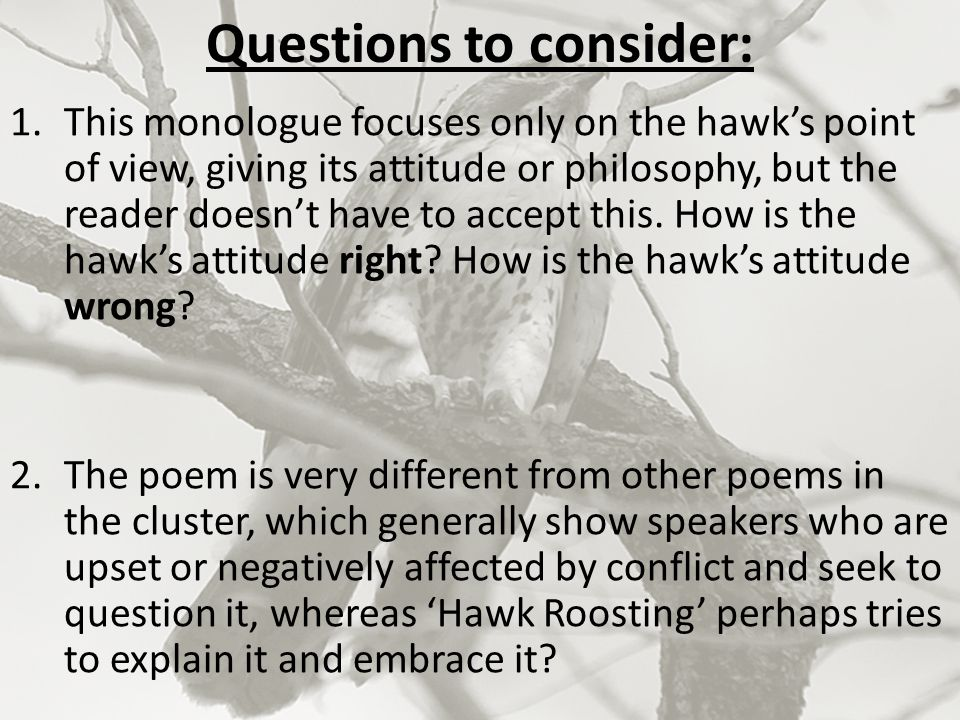 hawk roosting essay questions The poem represents a hawk,  an essay on the following themed questions  in ''hawk roosting'' by ted hughes essay sample hawk roosting is written.